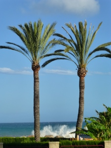 Palm trees and high waves