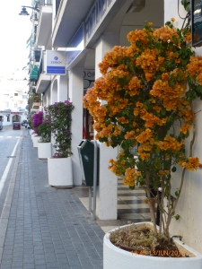 Beautiful flowers outside shops