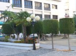 Formal tree shapes outside the Church in Altea