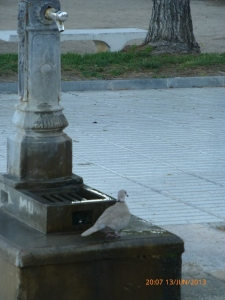 Dove at a water fountain