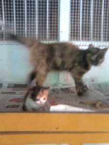 Mum and one of her kittens