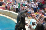 Sea lion show at Mundomar