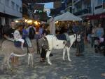 Animals in the street Altea