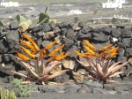 Cactus garden at a vineyard
