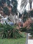 Broken palm trees