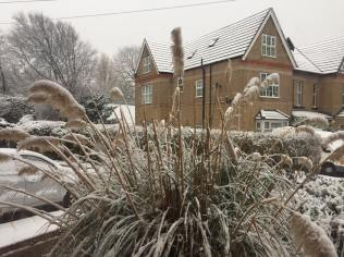 WK Snow